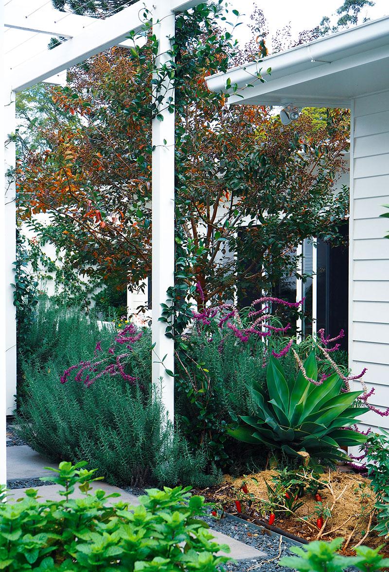 Mount Lofty Garden - Brisbane & Toowoomba Landscape Design
