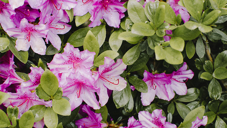 Plants For Spring Flowers
