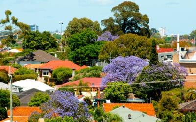 1# List for Best Native Trees in Brisbane Gardens